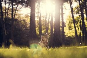pug standing on grass