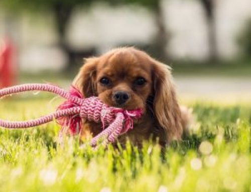 Comfort Products For Senior Dogs