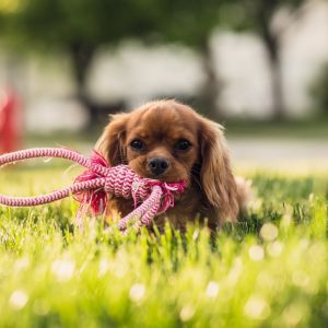 dog biting a leash