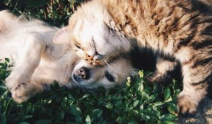 cat and dog playing on grass