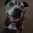 brown dog smiling