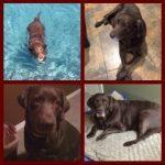 black dog four photos
