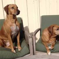 two dogs sitting on a chair