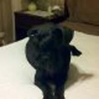 black dog on white floor