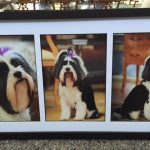 Pass away Shana - Paws at Peace Pet Hospice Dallas