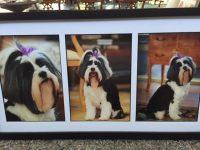 Pass away Shana - Paws at Peace Pet Hospice Dallas