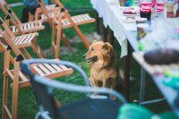 Food Safety For Pets During Thanksgiving - Paws at Peace Pet Hospice Dallas