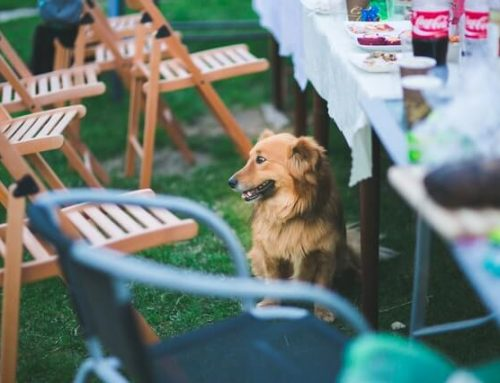 Food Safety For Pets During Thanksgiving