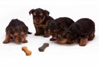 four puppies two bones