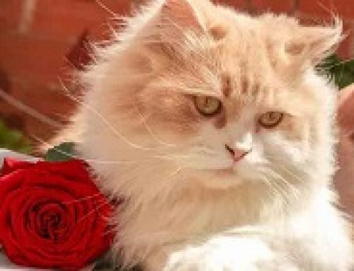 DANGEROUS VALENTINE THINGS YOUR PET SHOULD AVOID