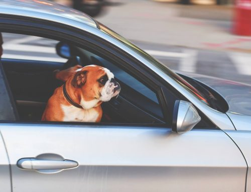 Recognizing Heat Stroke In Dogs And How To Prevent It