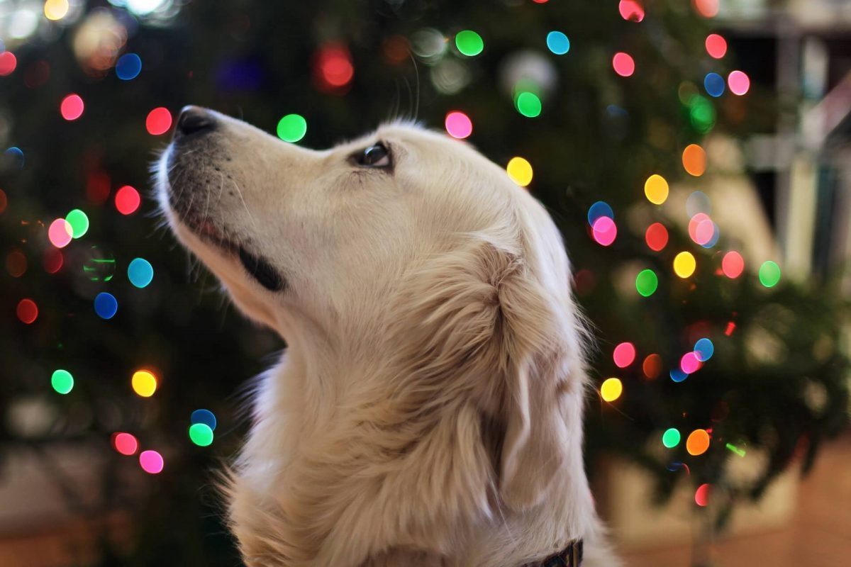bright dog look