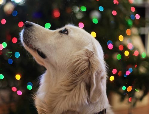 Foods To Avoid Giving Your Pet During The Holidays