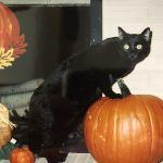pumpkin and black cat