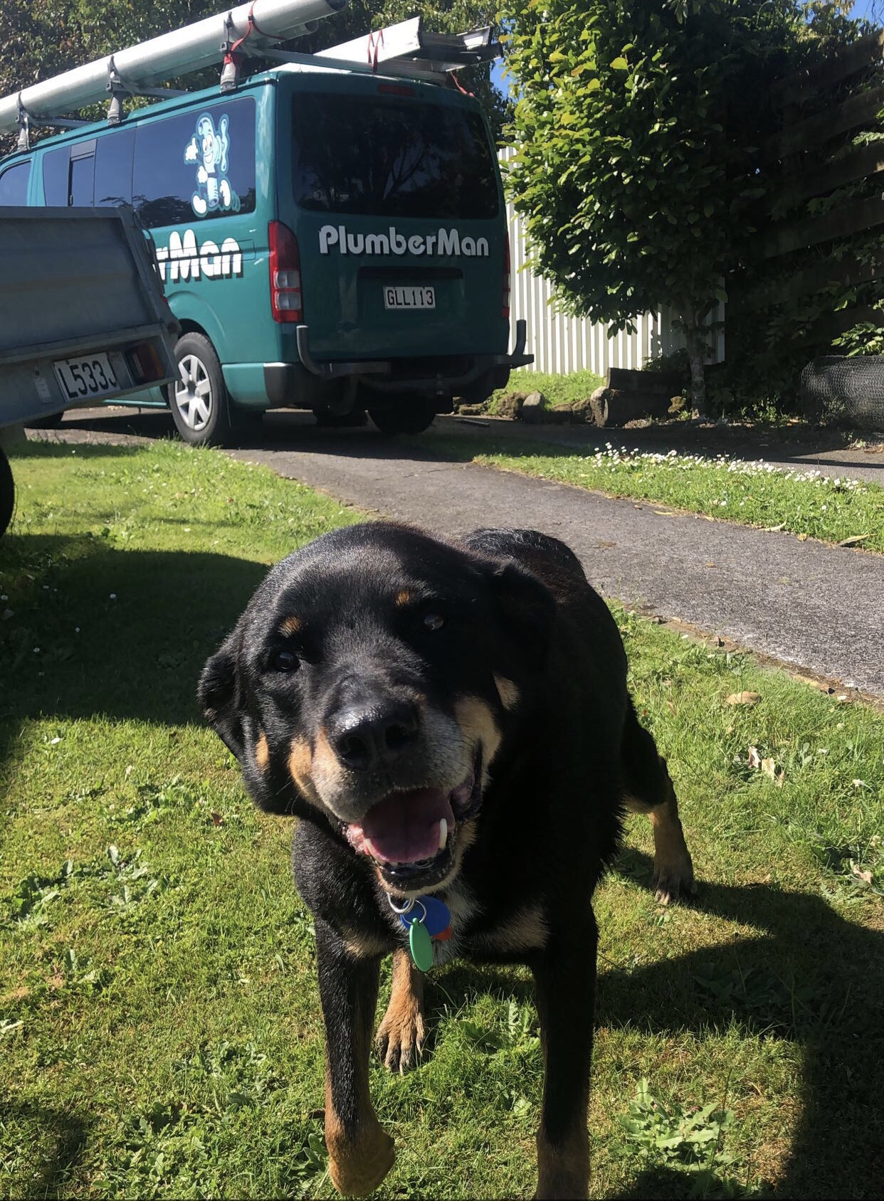 black dog in a backyard