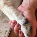 dog human handshake